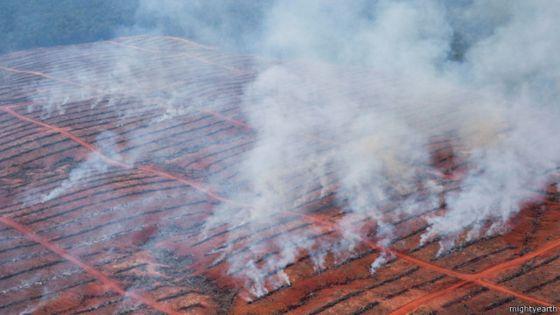 bbc-kebakaran-hutan